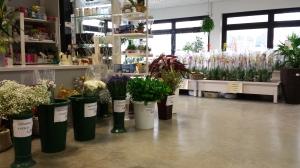 olivi, fiori