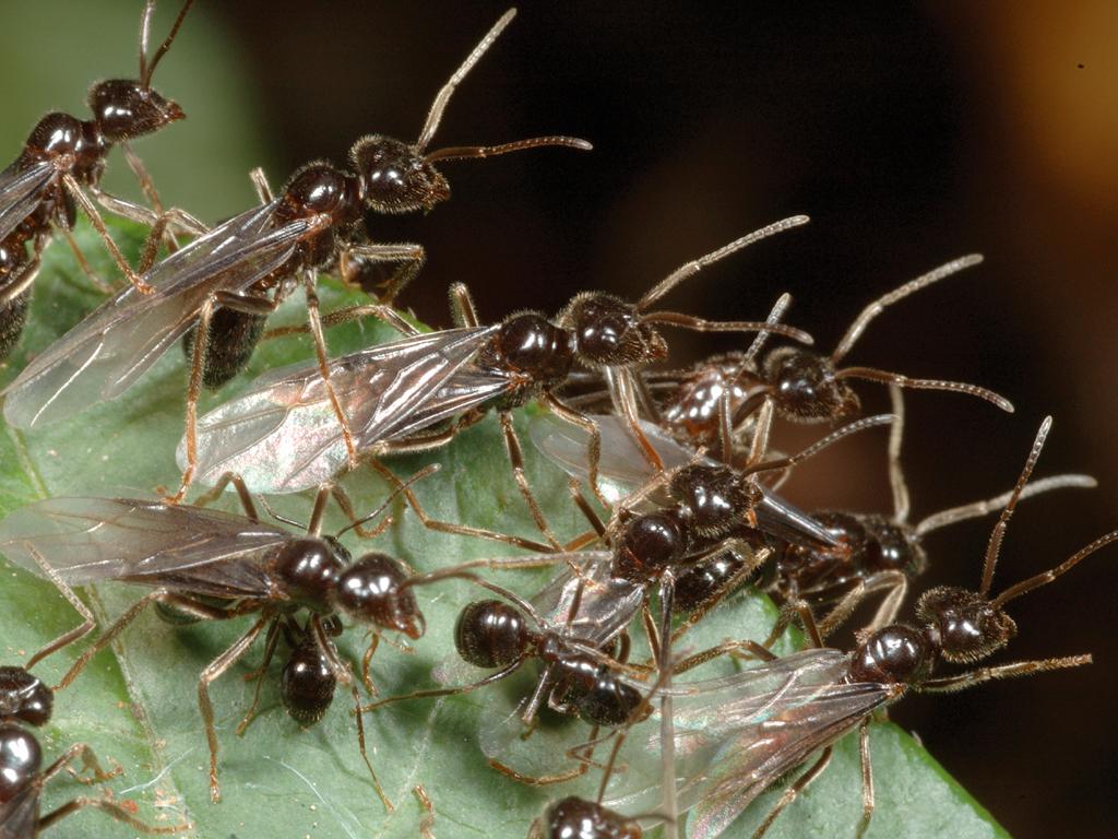Insetti come possiamo sbarazzarci delle formiche - Formiche in bagno ...