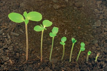 Biostimolanti, nuovi scenari per l'agricoltura