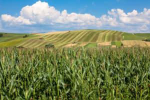 agricoltura competitiva