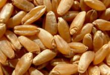 sementi