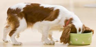 mangimi per cane
