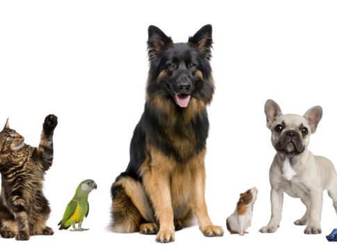 animali da compagnia portale