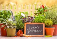 agricoltura casalinga
