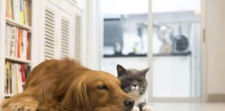 animali da compagnia