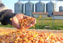 cereali e cerealicoltore
