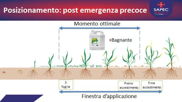 dicotiledonicida joystick di sapec agro italia