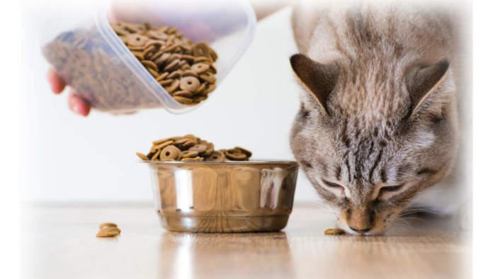 mangime biologico per animale