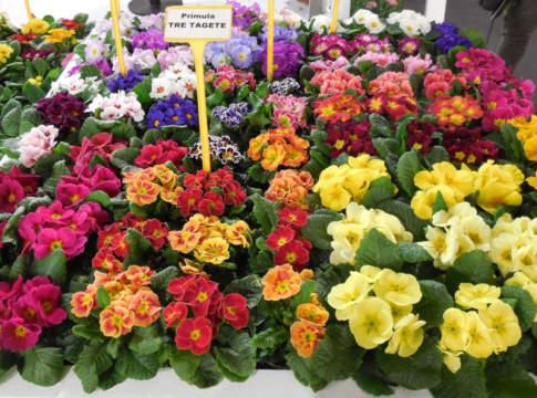 mercato del giardinaggio a myplant