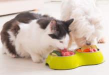 cure e alimenti di qualità per gli animali domestici