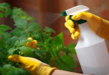 prodotti fitosanitari su piante