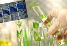 biostimolanti e la nuova normativa ue sui fertilizzanti