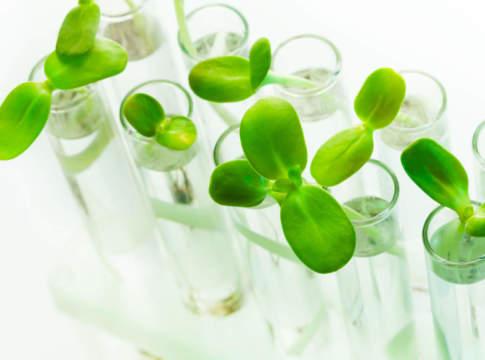 mercato biostimolanti