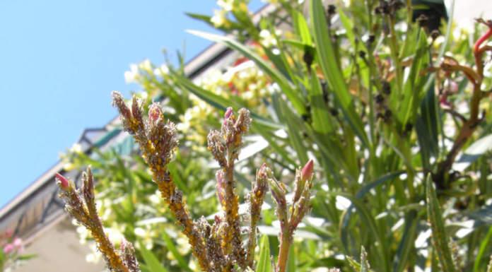insetticidi biologici