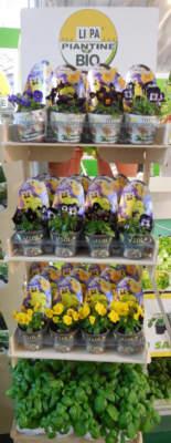 fiori commestibili di li.pa.