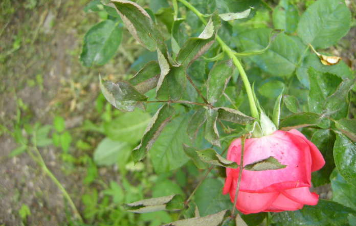 fitosanitari non professionali per agricoltura biologica