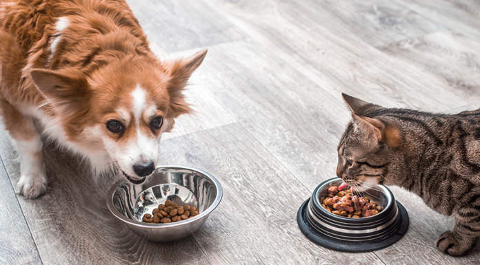 mangime industriale per cani e gatti