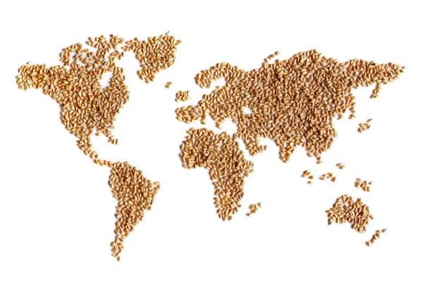 grano duro mercato internazionale