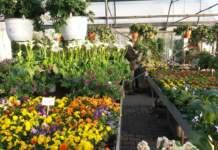 vendita piante e prodotti