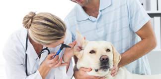gli animali non sono pericolosi, non trasmettono il coronavirus