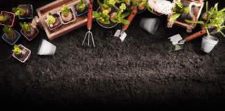 piante e prodotti biologici per giardinaggio