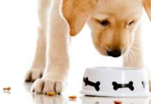 acquisti online animali