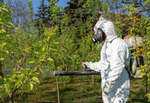 insetticidi 2021