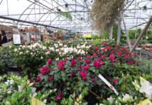 garden center piante